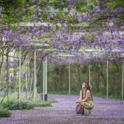 【新北。淡水景點】紫藤咖啡館(水源園區) / 近天元宮 / 紫藤花隧道 ~ 與紫藤花的浪漫邂逅。唯美到不想回家