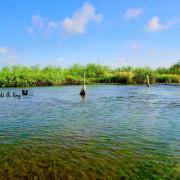 【彰化。竹塘】隱藏版秘境。竹塘水路。竹塘溼地