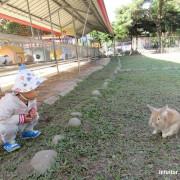 [嘉義]獨角仙休閒農場,孩子喜歡的小動物這裡都有,還有大草原可以奔跑/嘉義親子景點