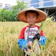 【苗栗景點】山水米有機稻場。漂浮在稻田的自然教室裡,體驗農夫收割的樂趣