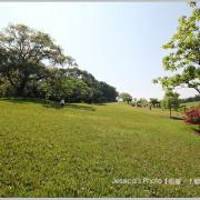 苗栗●南窩綠丘●綠野仙蹤之綿延大草原/三月木棉花烈焰綻放