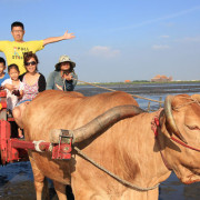 【彰化景點】世界僅存的人文遺產,坐全台灣唯一的海牛車體驗採蚵樂趣。芳苑海牛車隊