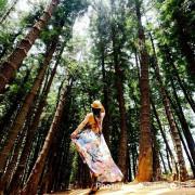 【台中。沙鹿區】黑色森林充滿著一股神秘氛圍,婚紗攝影外拍小秘境『九天森林(九天黑森林)』,文中附上路線導引圖。