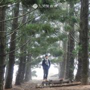 【台中景點推薦】九天黑森林,漫步迷霧魔幻森林之中