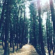 【台中。景點】大雅 / 神秘的九天黑森林,熱門婚紗外拍秘境,近都會公園