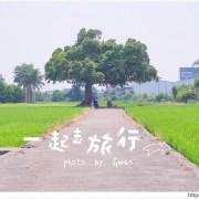 台中迷你版伯朗大道 - 真的不是在台東,這裡也有金城武樹!!