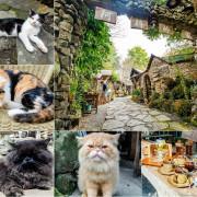 【嘉義旅遊】阿將的家23咖啡館.福山雅治都傾心的阿里山祕境.見證愛情的打作石板屋貓咪樂園,是咖啡館、是露營地、也是民宿