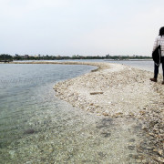 蚵民不經意的傑作    ..大鵬灣蚵殼島