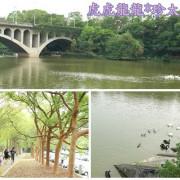『嘉義景點』紫荊樹蔭大道x羅馬噴水池 ||中正大學|| 大草皮野餐x天鵝湖x校園也能這麼美!