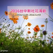 【玩樂.台中】2016新社花海節~每年新社最令人期待的花海盛事,帶著好心情來賞花吧!
