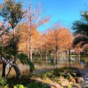【花蓮.慈】翻紅松葉秋冬限定美景▷落羽松秘境-鈺展苗圃