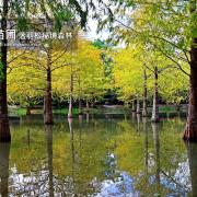 鈺展苗圃落羽松秘境森林-花蓮壽豐鄉旅遊拍照打卡景點,趁著秋高氣爽來看水中的落羽松