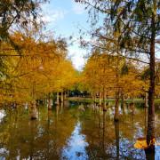 【花蓮旅遊】壽豐-精靈眼淚之神話美景般的秘境《落羽松森林》鈺展苗圃