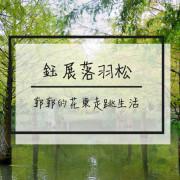 【花蓮遊記】鈺展落羽松森林~壽豐近東華大學秋意正濃的落羽松秘境