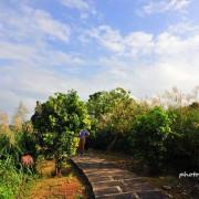 【林口 / 芒花】太平濱海步道。尋找漫天飛舞的芒花海