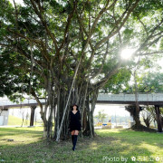 【台中。北屯區】見證台中水湳舊機場歷史的老榕樹,居然化身為『老樹公園』,再次付予它新的生命,提供民眾休憩好去處。
