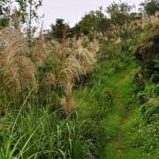 【鶯歌 / 賞芒】幸福步道。鶯歌蛋石。有像武俠小說的場景