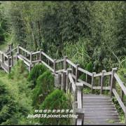 嘉義。二延平景觀步道。茶園。雲海漫步雲端