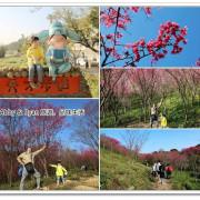 【桃園櫻花景點】楊梅秀才步道櫻花林~萬株櫻花盛開炸翻秀才步道啦!