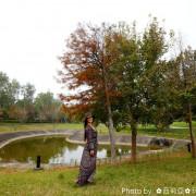 【苗栗。竹南鎮】誠摯推薦~讓我們走一趟『國家衛生研究院』,漫步在落羽松、楓葉步道,欣賞那落羽松針葉轉紅,彼此交錯形成一幅美麗小秘境。
