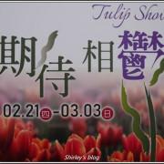 捷運士林站.2019士林官邸鬱金香展(期待相鬱)