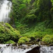 【南投。埔里】彩蝶瀑布。蝴蝶生態谷。南投埔里私房景點