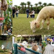 新竹親子旅遊景點 ▶ 綠世界生態農場 ▶ 大草皮上與可愛羊駝、鵜鶘互動 樹懶、鳥園、蝴蝶園  門票及園區介紹、北埔一日遊!
