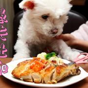 [新北三重] 三重寵物友善餐廳,大雞腿寵物餐毛孩們作夢都會笑!帶著毛小孩一起來這Party吧!愚夫灶咖