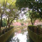 中壢景點˙櫻花綻放 [莒光公園] 美得像幅畫