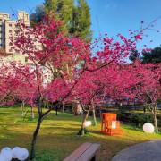 20200225 莒光公園賞櫻花