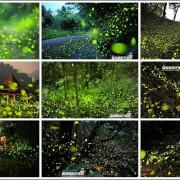 全台夢幻螢火蟲季景點推薦~2017年最新版賞螢活動懶人包!