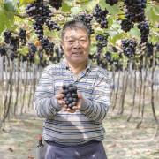 【彰化/職人】老班長葡萄,用一生的熱情淬鍊晶瑩的黑鑽