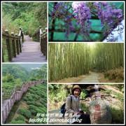 嘉義。瑞里浪漫紫藤花季。綠色隧道。野薑花步道。瑞太古道。圓潭生態園區。太興岩步道