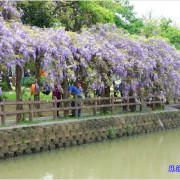 桃園龜山。大湖紀念公園~紫藤花開,邂逅這一季的紫色浪漫