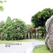 2020桃園龜山大湖公園,一園兩景紫藤花加上流蘇強力大放送,可惜最大值已過~