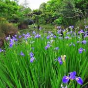 【林口 / 賞花】樂活公園 - 花開了!!好不美麗的社區公園