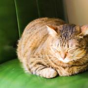 【台南】BORN 2 HER Cafe - 逛街累了就坐坐吧!
