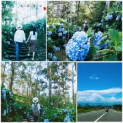 【台東  秘境】台東太麻里金針山│繡球花季節限定│青山農場咖啡