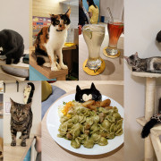 【板橋美食】貓欸Camulet  互動餵食好有趣 餐點好吃 貓耳朵麵 先預約 貓咪餐廳 捷運新埔
