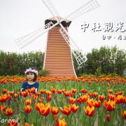 台中賞花景點/中社觀光花市~一年四季皆有大面積花海,賞花拍美照一次滿足