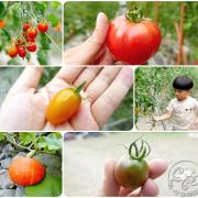 宜蘭員山鄉【禾昌農場】溫室培育新鮮無毒三色番茄、桃太郎,邊採邊吃還能將戰利品帶回家與親友分享!路過山林小溪;清涼你我的心。
