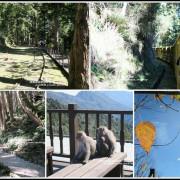 宜蘭。太平山茂興懷舊步道蹦蹦車穿梭伐木歲月的時光軌道