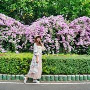 [泰山秘境 蒜香藤花海 ]百尺紫色瀑布超夢幻 楓樹河濱公園 花期僅有一周 想拍趁現在 - 安妮的天空