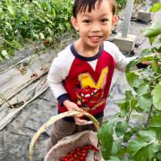 竹北採蕃茄-威榮喝豆漿長大的蕃茄窩