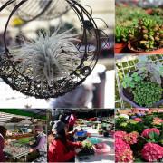 中興花卉農場~多肉植物種類超多價格超親民