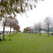 宜蘭三星【落羽松秘境】種植200棵落羽松的綠色大道,安農溪附近景點,田心橋旁!