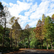 麗山公園落羽松~幽靜唯美追松
