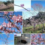 『高雄。寶山二集團櫻花公園』~2018櫻花實況/寶山國小/交通資訊