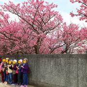 【台北-士林區】2020平菁街42巷寒櫻開