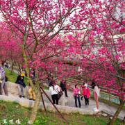 【台北-內湖區】2019樂活公園八重櫻花季